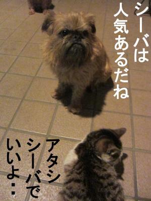 6_convert_20120229085201.jpg