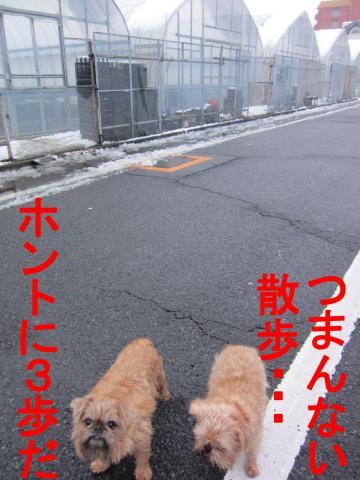 6_convert_20120301083403.jpg