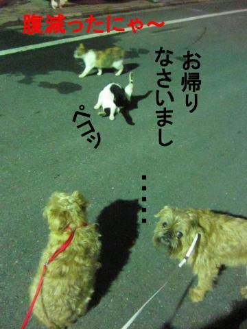 6_convert_20120302080507.jpg