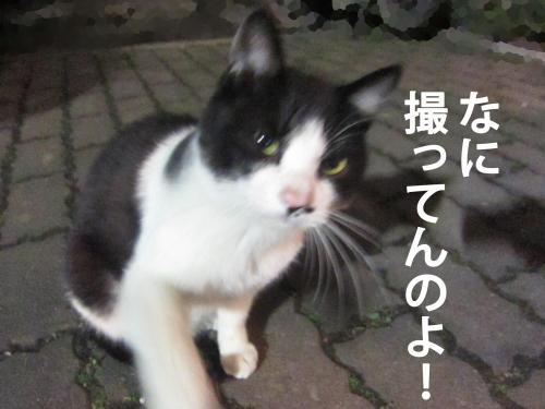 6_convert_20120308082921.jpg