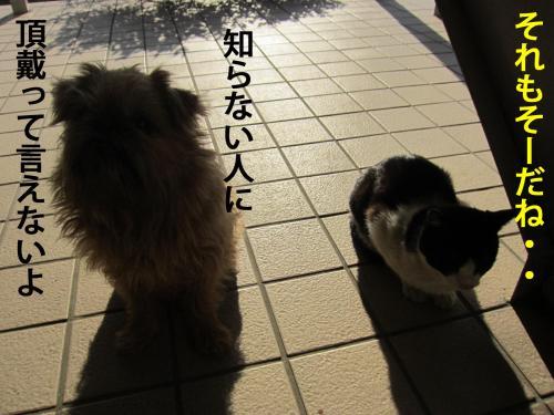 6_convert_20120409220704.jpg
