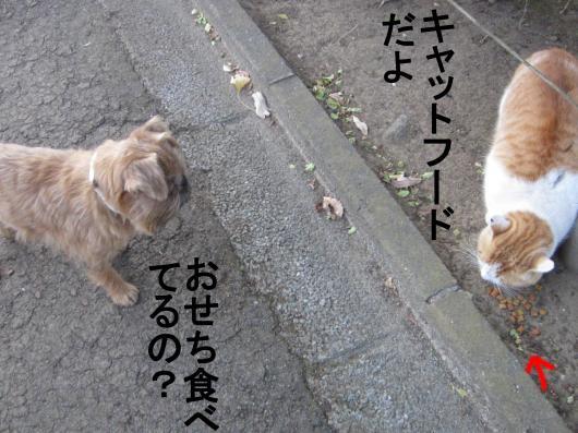70_convert_20120101070037.jpg