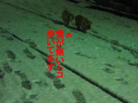 7_convert_20120124071439.jpg