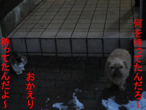7_convert_20120301083420.jpg