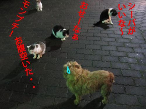 7_convert_20120319085014.jpg