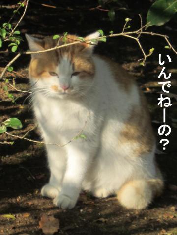80_convert_20111217073202.jpg