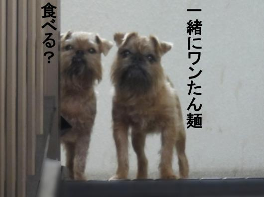 99-0_convert_20120119073425.jpg