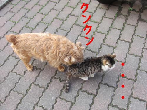 B_convert_20120307084120.jpg