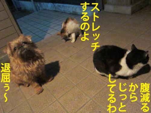 B_convert_20120404091709.jpg