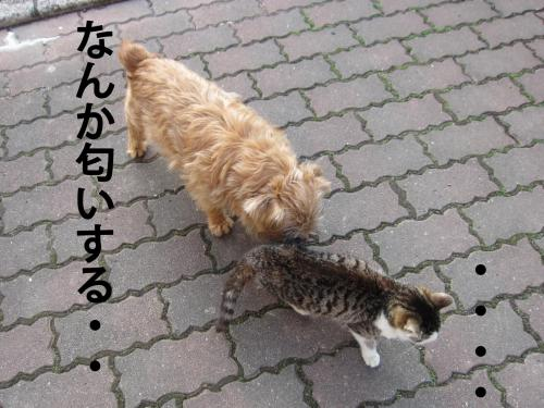 C_convert_20120307084148.jpg