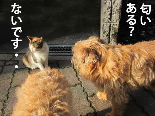 D_convert_20120307084216.jpg