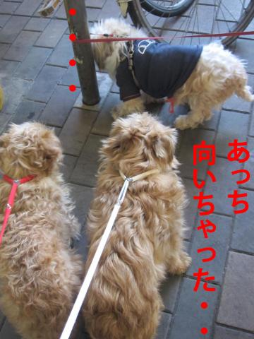 F_convert_20120413085623.jpg
