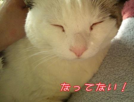 DSC_0223 (4)