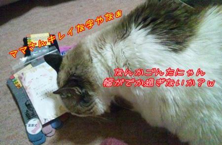 DSC_0217 (10)