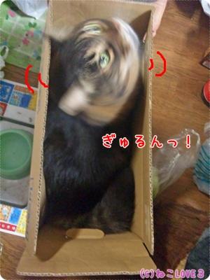 chibi1.jpg