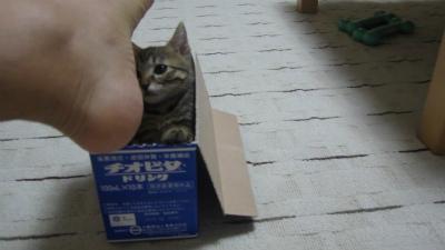 ドラクエな子猫3