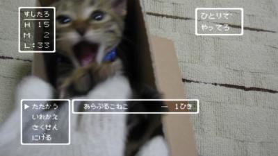 ドラクエな子猫2