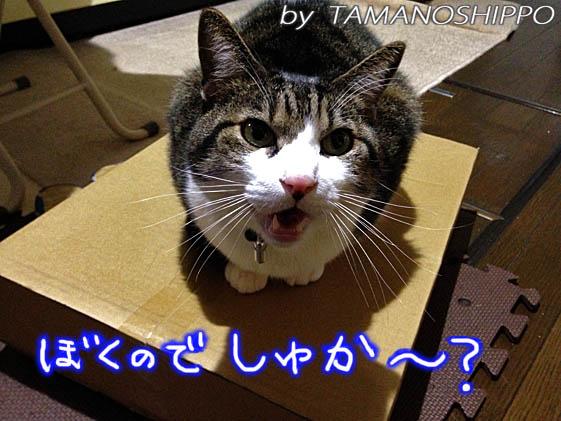 荷物を確認する猫