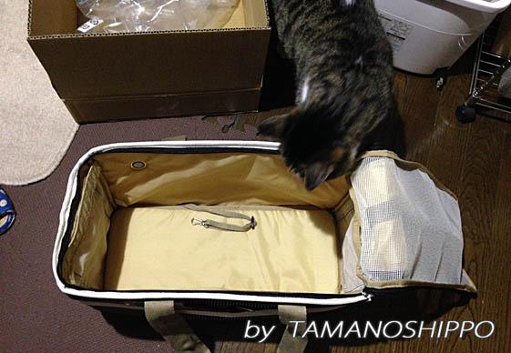 NEW キャリーケースを確認する猫