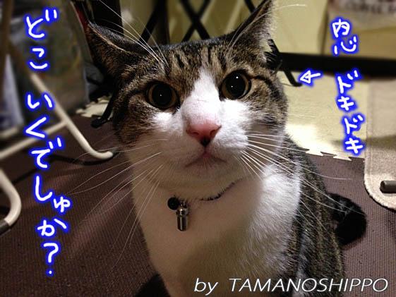 文句を言う猫(どこに行くでしゅか?)