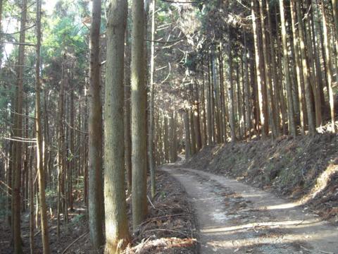 kamiyoshi_05.jpg