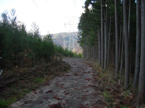kamiyoshi_39.jpg