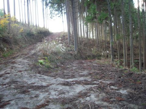 kamiyoshi_41.jpg