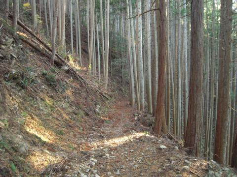 kamiyoshi_50.jpg