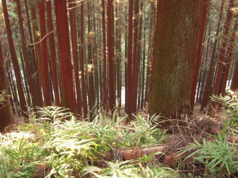 kamiyoshi_55.jpg
