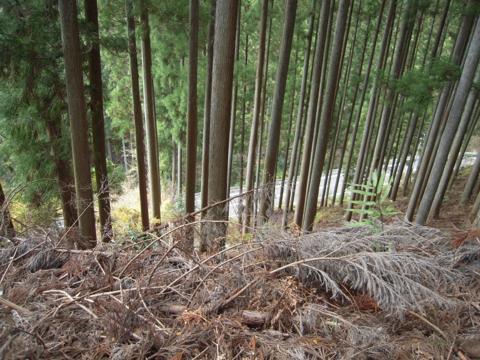 kamiyoshi_59.jpg