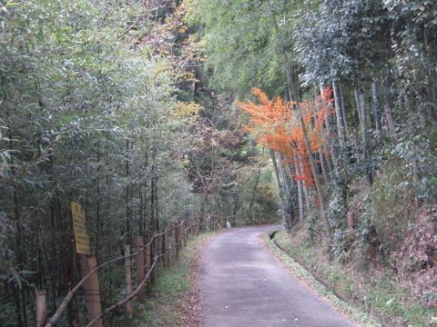 nishiy_14.jpg
