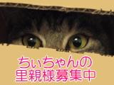 chi-banner.jpg