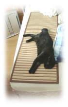 c100809竹.jpg