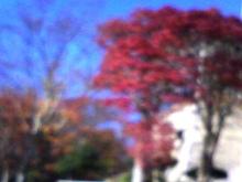 セラミックのブログ-紅葉2010・秋01