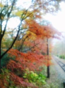 セラミックのブログ-紅葉2010・秋02