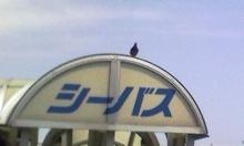 セラミックのブログ-シーバス(表看板)