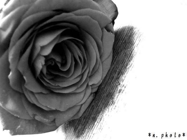 バラ (1) - コピー