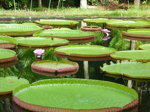パンプルムース植物園