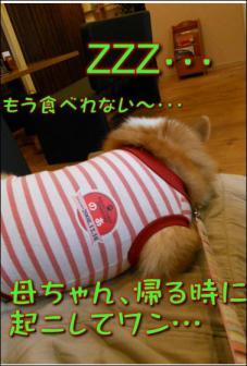 カフェで爆睡犬