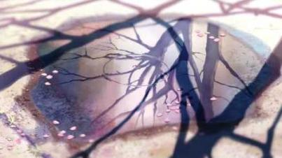 水溜りの桜の花びら