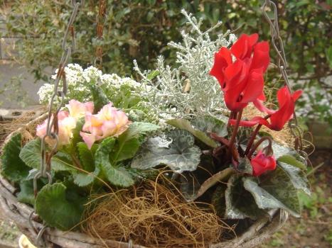 昨年の鉢植え