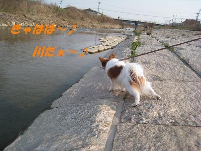 IMG_1330 1