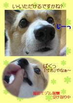 Kasutera_syarei
