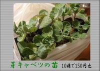 2009_autam3