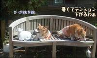 Awaji_20100430_3