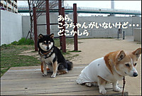 20110331_2