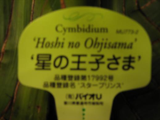 2011.12 ノワール・松枝・花