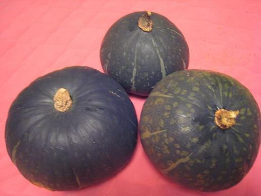 IMG_1760 かぼちゃ3こ-92