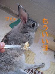 IMG_1894-くすり食べない