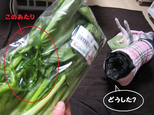 2004-小松菜1